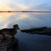 Pastel shades, wide-open skies and a smooth-as-glass surface make this sunset on Lake Eufaula so beautiful that even man's best friend takes a moment to appreciate it.