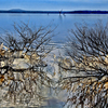 Winter icicles turn shoreline limbs into works of art as they reflect on the surface of Lake Eufaula.