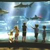 Children are mesmerized by the shark tank at the Oklahoma Aquarium.  The residents here are the world's largest captive bull sharks and visitors have the opportunity to get up close and personal at the viewing windows and in the walk-through tunnel in the tank.
