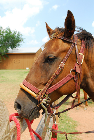 A horse waits for a rider at Tatanka Ranch in Stroud.  Tatanka Ranch offers cabins and a lodge, horseback riding, paddle boats and kayaking and more in a relaxing countryside setting.