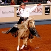 Freestyle reining is a favorite event with the crowd at the NRHA Futurity & Adequan Championship Show in Oklahoma City.