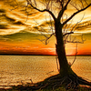 An old tree's roots cling to the shoreline of Lake Eufaula as the sunset paints the sky dramatically.