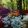 The annual Azalea Festival in Muskogee is a spectacular explosion of color as azaleas of every shade blend with dogwood and redbud blossoms, tulips and the spring green of the park's trees. Honor Heights Park plays host to the event each April.