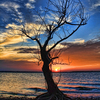 An old tree is transformed into a work of art by a magnificent sunset on Lake Eufaula.