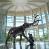This collosal sculpture greets visitors to the the Sam Noble Oklahoma Museum of Natural History.  The museum houses an outstanding collection of articulated dinosaur skeletons and other prehistoric creatures that once roamed the plains of Oklahoma or swam in the seas that covered the state.