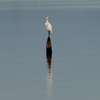 A lone egret perches atop a stump in the shallows of Lake Eufaula.