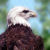 This majestic eagle is a resident at the highly rated Tulsa Zoo.