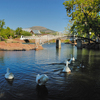 A family of geese set off for a swim in the quaint town of Medicine Park.  Visitors have been coming to this historic resort town since the 1920s to enjoy the cobblestone village, artisan shops and clear waters.