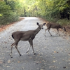 Deer are frequent visitors at Beavers Bend State Park in southeastern Oklahoma.