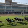 Remington Park Racetrack & Casino is Oklahoma's major league horse racing venue featuring some of the finest equine athletes in the nation.
