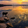 The peaceful shores on Lake Eufaula are a perfect escape for a walk with man's best friend and the gorgeous sunsets are the icing on the cake.