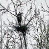 This nesting heron was spotted along Highway 69 in Canadian near Eufaula State Park.