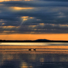 A pair of geese drift through a scene of picture perfect tranquility on Lake Eufaula during an amazing sunset.