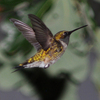 This incredible shot of a hummingbird in midair was snapped in Little Axe.