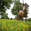 The horses at Wild Things Farm in Pocola enjoy fields of wildflowers and visits from guests.
