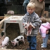 Kids love the petting zoo at the annual Beavers Bend Folk Festival in Broken Bow.