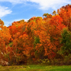 Fall colors at their peak along Spavinaw Creek in Spavinaw.