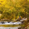 A fly fisherman enjoys some solitude amidst colorful autumn foliage on the Mountain Fork River in Beavers Bend State Park.