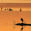 Ducks paddle by on the calm surface of Lake Eufaula as a heron looks on in the peaceful glow of a winter sunset.
