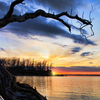 A gnarled old tree on the shore of Lake Eufaula is part of a gloriously scenic winter sunset.