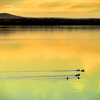 Ducks paddle across the still surface of eastern Oklahoma's Lake Eufaula in the golden glow of sunset.