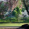 Dreamy spring scenery greets visitors to Honor Heights Park in Muskogee each spring when the park bursts to life with azaleas, dogwoods, redbuds, tulips and many other blossoms.