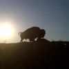 A massive bison sculpture greets travelers on Route 66 near Sapulpa.