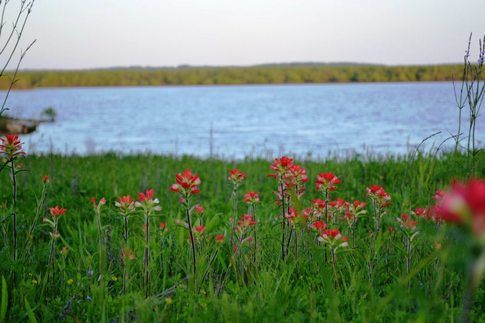 Wildflowers on the shores of Lake Texoma in Kingston.