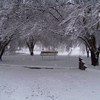 Stroup Park in Holdenville is transformed into a winter wonderland by a scenic snowfall.
