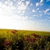 The Tallgrass Prairie Preserve near Pawhuska is the largest protected area of tallgrass on Earth, spanning 39,000 acres.