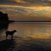 A lucky dog watches a gorgeous sunset from the shore of Lake Eufaula.