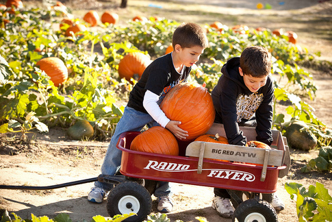 Kids can visit the Woodbine Farms Pumpkin Patch in Ardmore to select a pumpkin to carve or paint for Halloween.