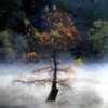A cypress tree surrounded by autumn mist in the waters of Beavers Bend State Park in Broken Bow.