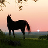A lone horse gazes toward the horizon as the sun sets over the picturesque landscape surrounding Guymon.