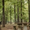 Lake Eucha Park in Jay features 55 picnic tables surrounded by beautiful landscapes.