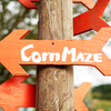 Find hours of fun at pumpkin patches and cornfield mazes across Oklahoma each fall.