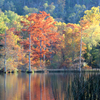 Beavers Bend State Park becomes a magnificent tapestry of colorful fall foliage each year.
