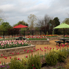 The Tulip Garden at Honor Heights Park in Muskogee is a perfect setting for a springtime picnic.