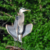 This Great Blue Heron was caught cooling off at Claremore Lake in Claremore.