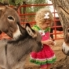 Friendly donkeys greet a guest at The Menagerie: Bradt's Mammals & More in Alva.