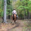 Rent a horse from Beavers Bend Depot and set off into the gorgeous woods of Beavers Bend State Park.