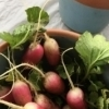 Seasonal goods like radishes are up for grabs at the Woodward Farmers Market.