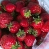 Pick out plump, red strawberries at Gibson Gardens in Bixby.