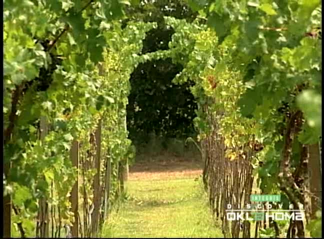 Stroll through the vineyards and enjoy a tasting at Sparks Vineyard.