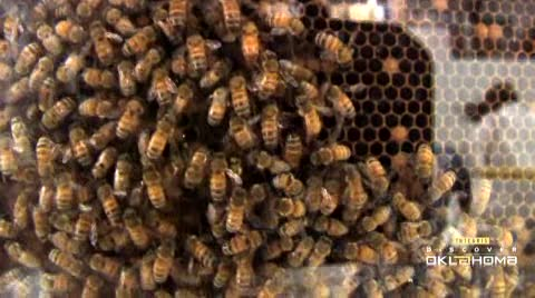 Cripple Creek  Honey Farm offers tours and tasty honey.