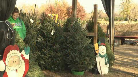 Visit the Owasso Christmas Tree Farm to pick the perfect holiday tree.