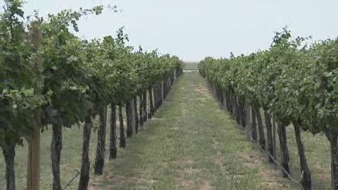 Sample divine wine from northwest Oklahoma at Plymouth Valley Cellars.