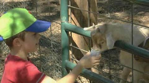 Children's activities abound at the Woodbine Farms in Ardmore.