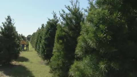 Visit the Red Barn Christmas Tree Farm to begin your holiday season.