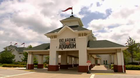 The Oklahoma Aquarium in Jenks is a submersive experience.